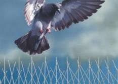 Control de aves (1)