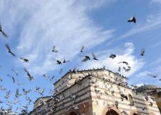 Control de aves (2)
